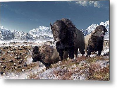 Bison Herd In Winter Metal Print by Daniel Eskridge