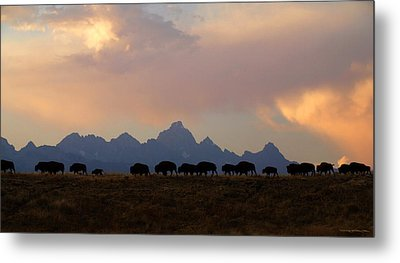 Bison March Metal Print by Patrick J Osborne