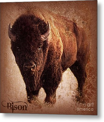 Bison Metal Print by Mindy Bench