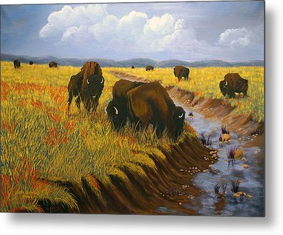 Bison Still Roam The Plains Metal Print by J Cheyenne Howell