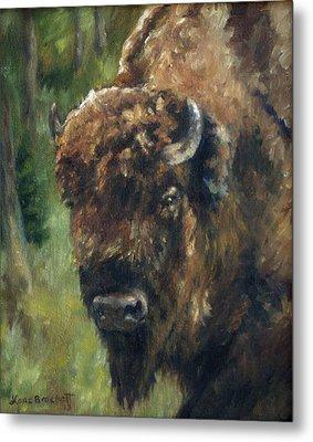 Bison Study - Zero Three Metal Print