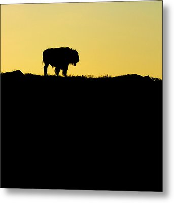 Metal Print featuring the photograph Bison Sunrise by Sonya Lang