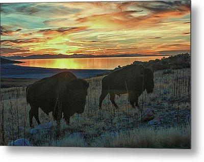 Bison Sunset Metal Print