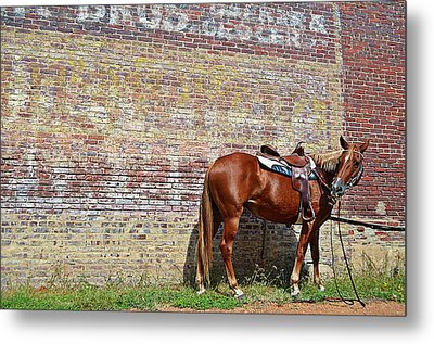 Bite Of Grass Metal Print by Kelly Kitchens