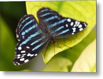 Black And Blue Metal Print by Katherine White