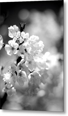 Black And White Blossoms Metal Print