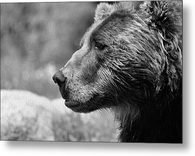 Black And White Brown Bear Metal Print
