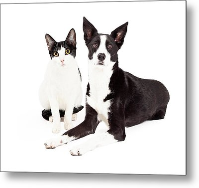 Black And White Cat And Dog Metal Print by Susan Schmitz