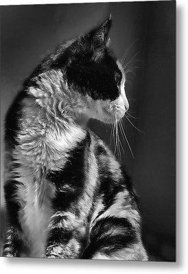 Black And White Cat In Profile  Metal Print by Jennie Marie Schell