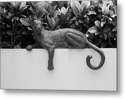Black And White Cat Metal Print by Rob Hans