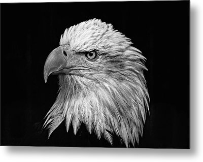 Black And White Eagle Metal Print by Wes and Dotty Weber