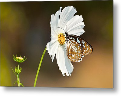 Black And White Metal Print by Fotosas Photography