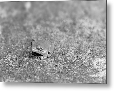 Black And White Frogger Metal Print