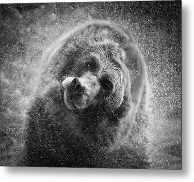 Black And White Grizzly Metal Print by Steve McKinzie