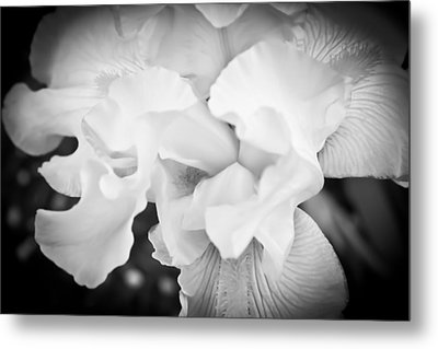 Black And White Hibiscus Metal Print by Kara  Stewart
