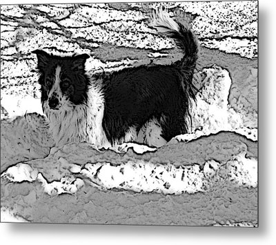 Black And White In Snow Metal Print by Michael Porchik