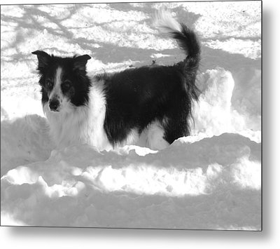 Black And White In The Snow Metal Print by Michael Porchik