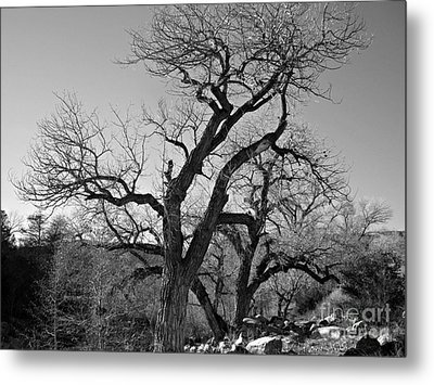 Metal Print featuring the photograph Black And White Oak by Janice Westerberg