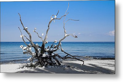 Metal Print featuring the photograph Black And White On Blue by Phil Abrams