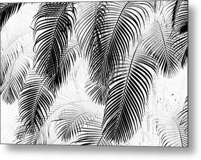 Black And White Palm Fronds Metal Print by Karon Melillo DeVega
