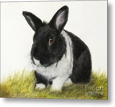Black And White Pet Rabbit Metal Print