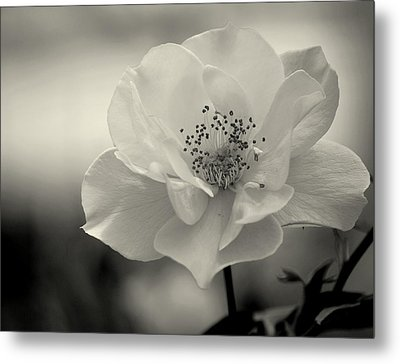 Black And White Rose Metal Print