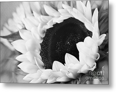 Metal Print featuring the photograph Black And White Sunflower by Eden Baed