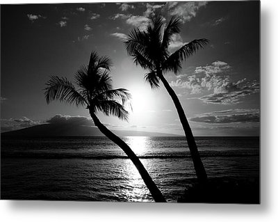 Black And White Tropical Metal Print