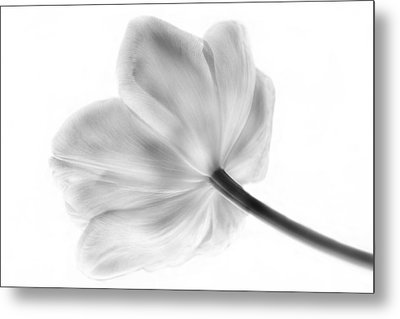 Black And White Tulip Metal Print