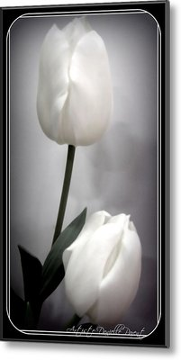 Black And White Tulips  Metal Print by Danielle  Parent