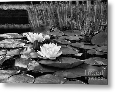 Black And White Version Metal Print by John S
