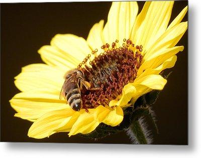 Black And Yellow Bee Beauty Metal Print