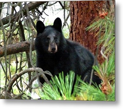 Black Bear 1 Metal Print
