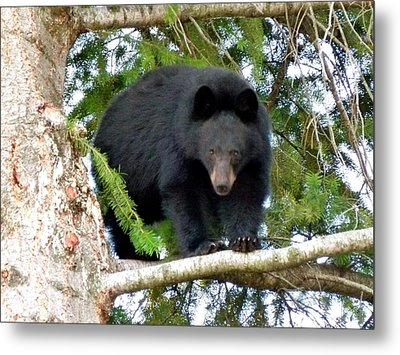 Black Bear 2 Metal Print