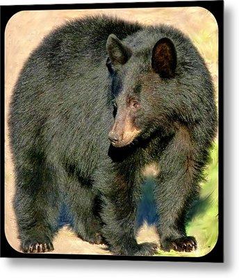 Black Bear 3 Metal Print by Will Borden