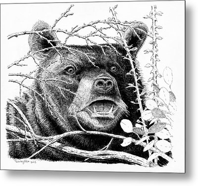 Black Bear Boar Metal Print