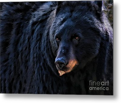 Black Bear Metal Print by Clare VanderVeen