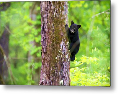 Black Bear Cub In Tree Metal Print by Dan Friend