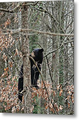 Metal Print featuring the photograph Black Bear Cub by William Tanneberger