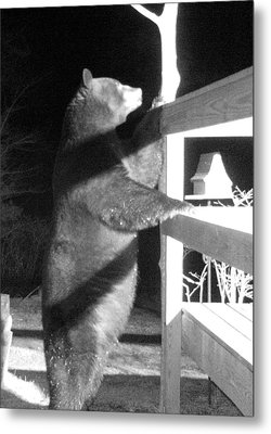 Metal Print featuring the photograph Black Bear by Mim White