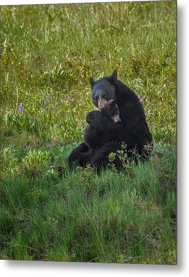 Black Bear Sow Hugging Cub Metal Print