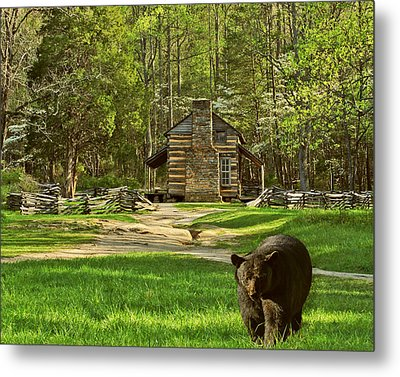 Black Bear Wandering II Metal Print