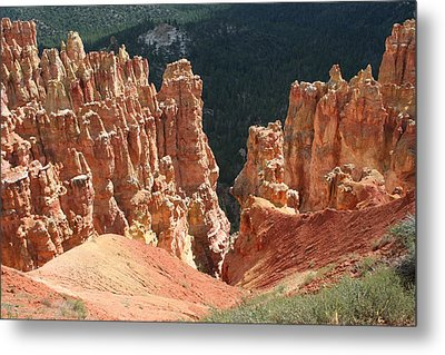 Black Birch Canyon Metal Print by Mary Gaines