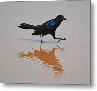 Black Bird - Strutting At The Beach Metal Print
