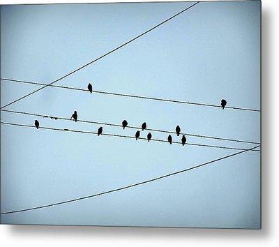 Black Birds Waiting In Blue Metal Print