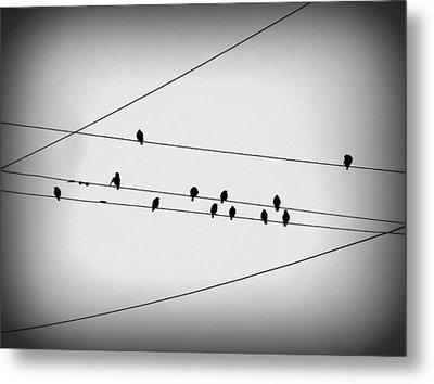 Black Birds Waiting Metal Print