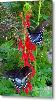 Black Butterflies Metal Print