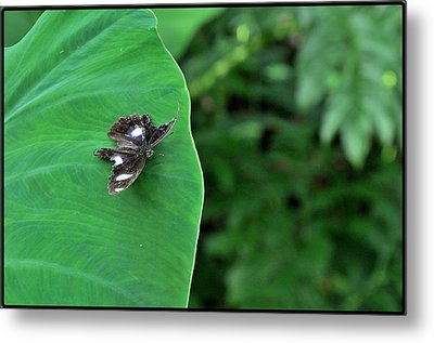 Black Butterfly Metal Print by Achmad Bachtiar
