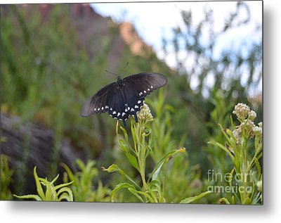 Black Butterfly Macro At Bottom Of Grand Canyon Metal Print