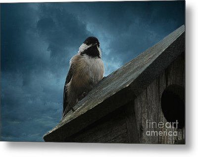 Metal Print featuring the photograph Black-capped Chickadee  by Marjorie Imbeau